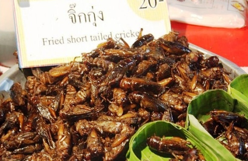 insects - khao san street food bangkok